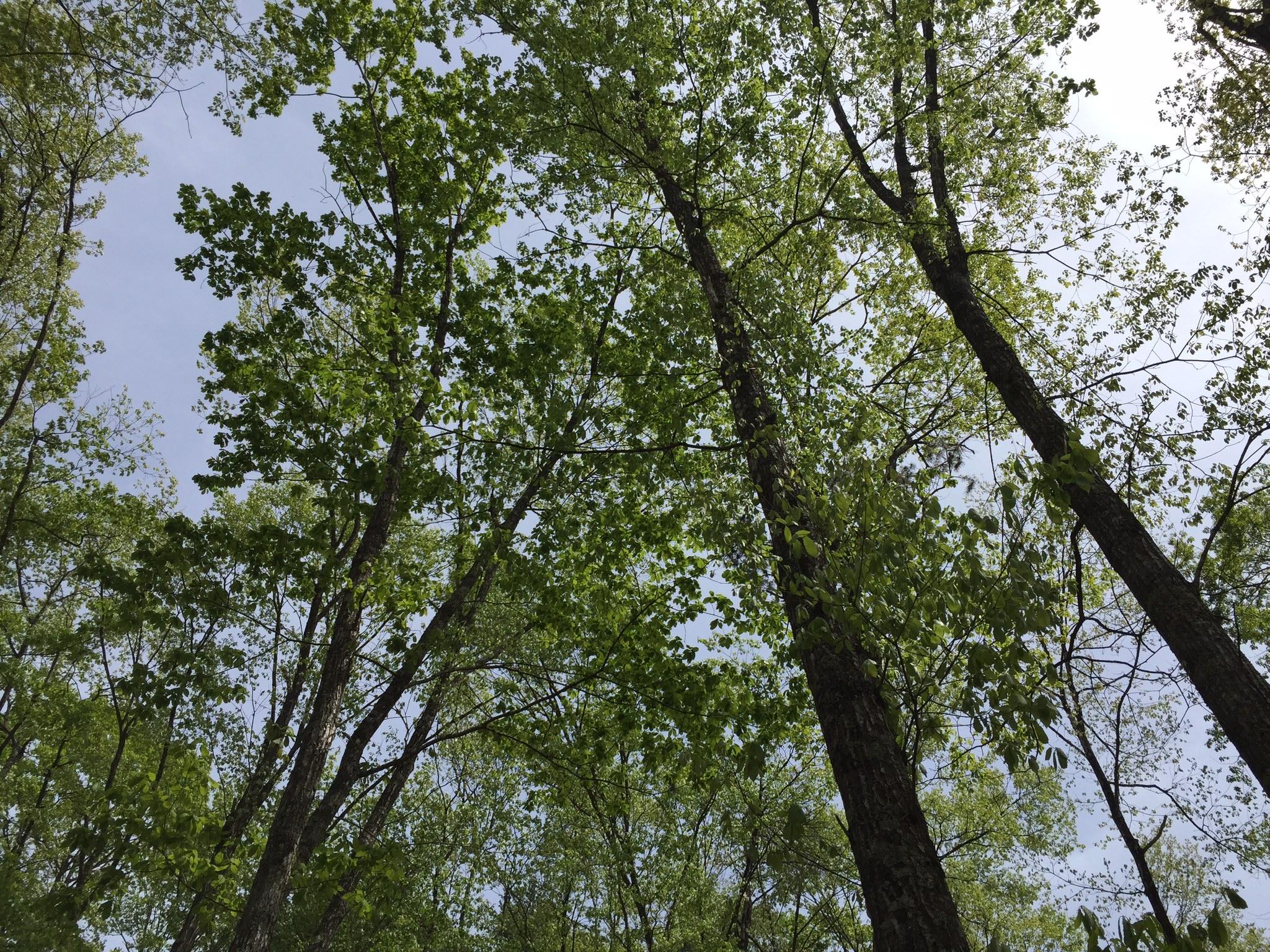 空気のきれいな高山のyuicaの森